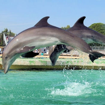 Antibes-Marineland